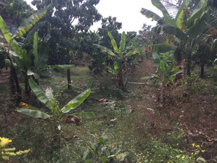 Sala Bai Siem Reap